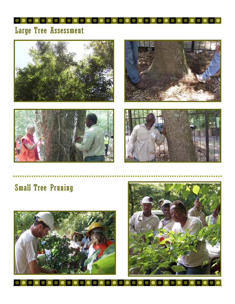 Tree-Pruning-Workshop1_Page_2