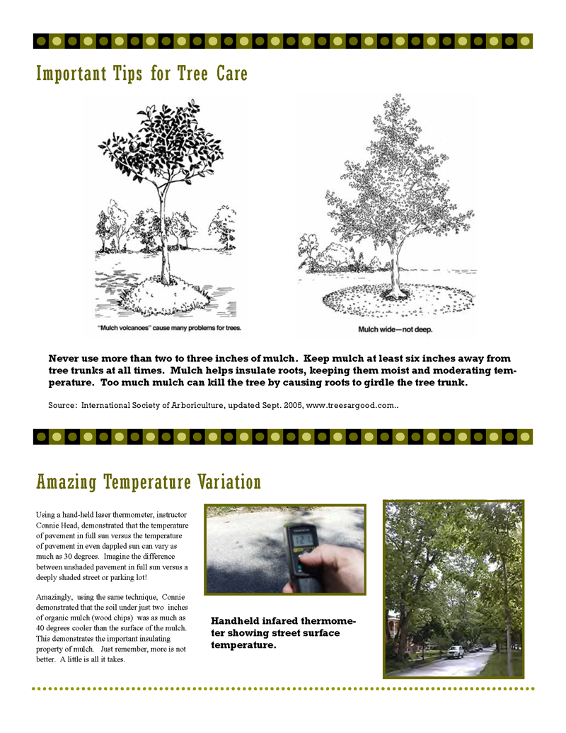 Tree-Pruning-Workshop1_Page_3